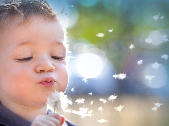 Child with dandelion Contentslider